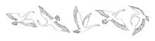 Hand Drawn Flying Swans Set. W...
