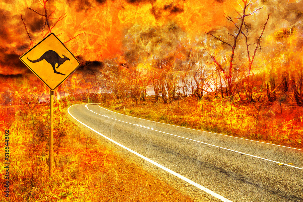 Fototapeta Bushfires in Australia. Warning kangaroo crossing sign on country road with Australian forest fire on background. Conceptual: save kangaroos, global warming, natural disaster, climate change.