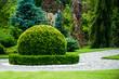 canvas print picture - boxwood bush ornamental garden design