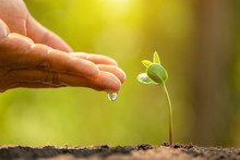 Hand Giving Water To Young Green Sprout Growing In Soil On Green Nature Blur Background