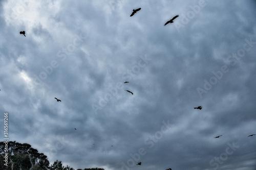 Valokuvatapetti 不吉な鳥達