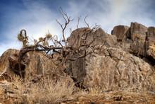 Charred Tree Along The Trail In Joshua Tree National Park