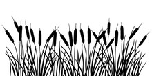 Horizontal Bunch Of Bulrush Or Reed Or Cattail Or Typha Leaves Silhouette In Black Isolated On White Background.