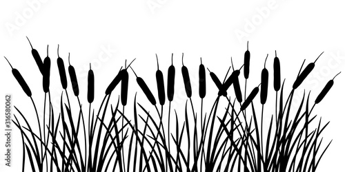 Fotografie, Obraz Horizontal bunch of Bulrush or reed or cattail or typha leaves silhouette in black isolated on white background