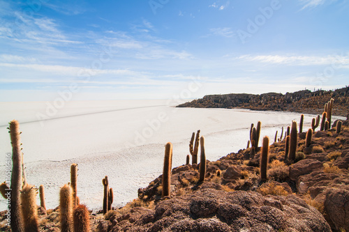Desert landscape with salt lake and cactus in Bolivia Canvas Print