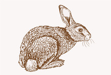Graphical Vintage Sketch Of Bunny, Vector Sepia Illustration