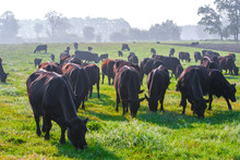 Summer Morning In The Pasture....