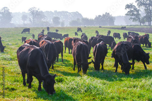Summer morning in the pasture Wallpaper Mural