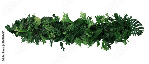 Obraz Green leaves of tropical plants bush  (ferns, climbing bird's nest fern, philodendrons, Monstera) floral arrangement indoors garden nature backdrop isolated on white background with clipping path. - fototapety do salonu
