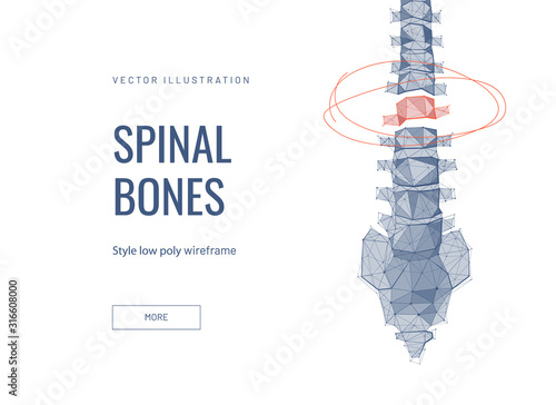 Cuadros en Lienzo  Spinal discs low poly wireframe landing page template