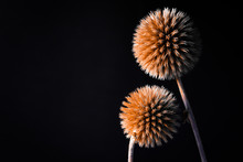 Dried Flowers. Dried Flowers On A Black Background. Flowers On A Black Background . Dry Grass