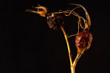 Dried Flowers. Dried Flowers O...