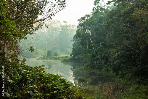 Pristine untouched primary forest of Andasibe - Mantandia National Parc, Madagascar