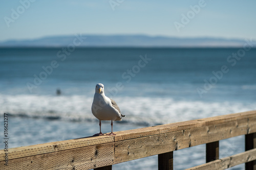 Photo seagull on the pier