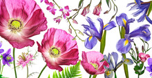 Three Poppies, Irises And Other Flowers  On White Background