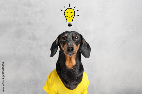 Carta da parati smart and clever dog  dachshundwith a light bulb with a smile, over your head