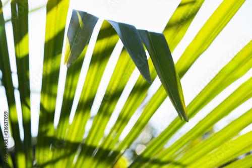 Photo Hojas de palmera