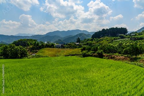 Obraz 田舎の田園風景 - fototapety do salonu