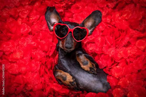 Obraz valentines wedding dog in love - fototapety do salonu