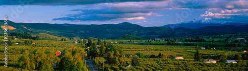 Obraz This is the Hood River Valley. It is the Valley view with Mount Hood in the background. - fototapety do salonu