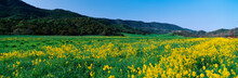 This Is A Spring Field Of Must...