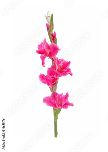 Fotografering Gladiolus isolated on white background