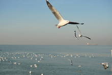 Group Of Seagulls Flying And F...