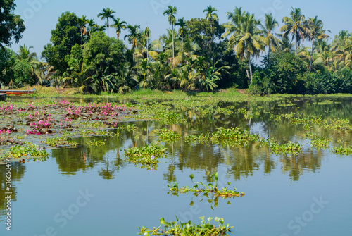 Photo Landscape of backwater with waterlylies, kumarakom, kerala, South India
