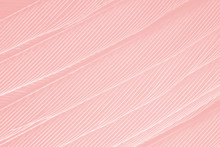 Beautiful Soft Pink Feather Wi...