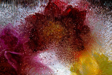 Frozen Flower Abstract Colorfu...
