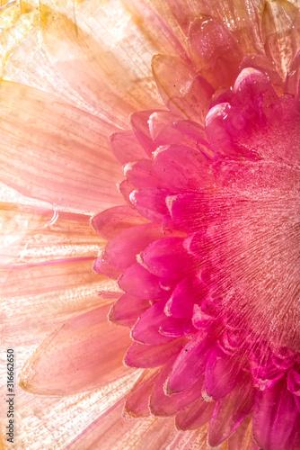 mrozony-rozowy-kwiat-w-lodzie