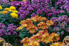 Colourful Flowers In The Garde...