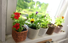 Window Sill With Flowers Of Petunia And Pansy In Pots Against Sunny Lights.