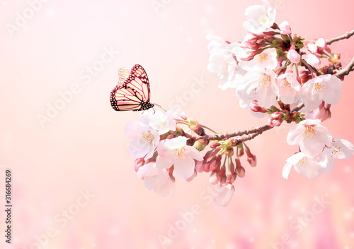 Obraz Beautiful magic spring scene with sakura flowers - fototapety do salonu