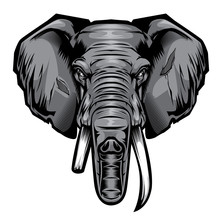 Head Elephant Drawing Vector Illustrator