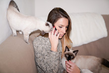 Girl Petting Siamese Cat Two I...