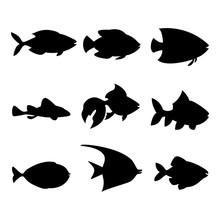 Set Of Beautiful Fish, Great D...