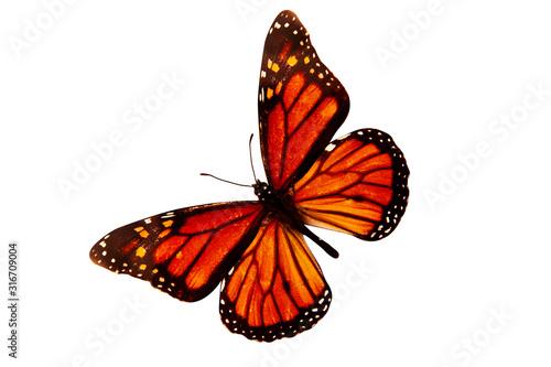 Fényképezés Beautiful orange butterfly isolated on a white background
