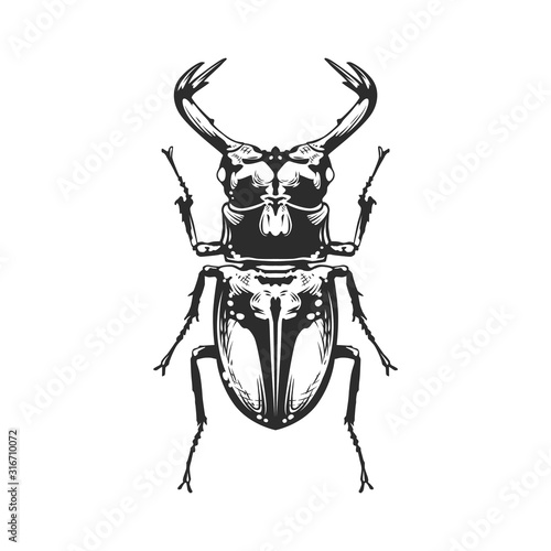 Vector Engraving Insect Tableau sur Toile