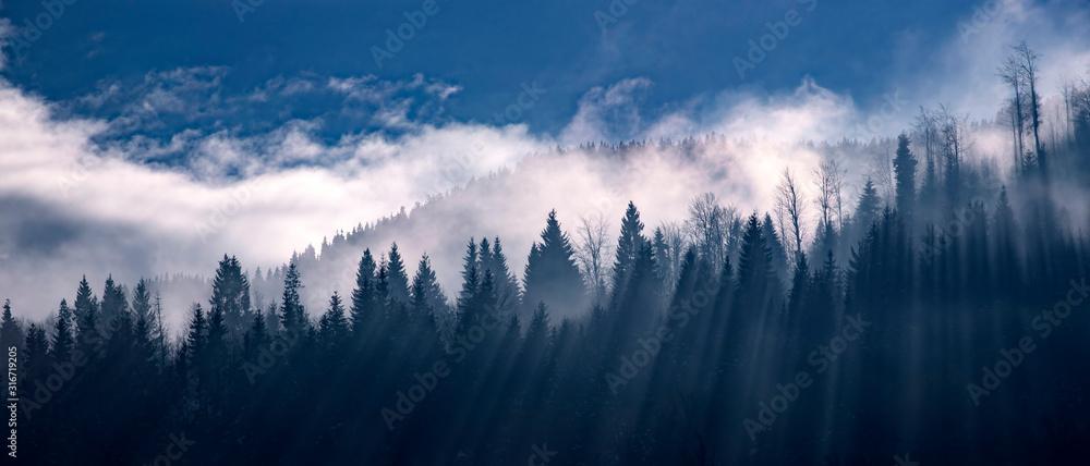 Fototapeta Sun light over winter forest.
