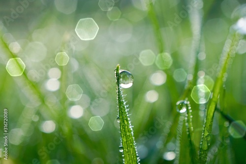 Obraz raindrop on the green grass in rainy days, green and bright background - fototapety do salonu