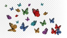 Flying Butterflies. Colorful B...