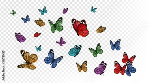 Flying butterflies. Colorful butterfly isolated on transparent background. Spring and summer insects vector illustration. Butterfly summer and spring insect, flying animal - 316731435