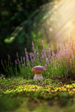 Boletus Grows In The Forest On...