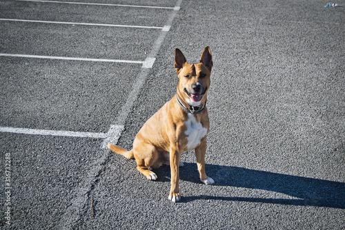Cuadros en Lienzo Tul, my mixed breed dog