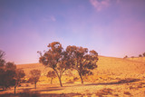 Landscape with trees in desert at sunrise. Israel