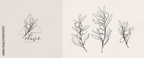 Fototapeta Olive logo and branch. Hand drawn wedding herb, plant and monogram with elegant leaves for invitation save the date card design. Botanical rustic trendy greenery obraz