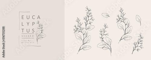 Fototapety, obrazy: Seeded eucalyptus logo and branch. Hand drawn wedding herb, plant and monogram with elegant leaves for invitation save the date card design. Botanical rustic trendy greenery