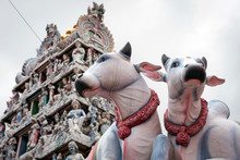 Cow Statues And Temple At Litt...