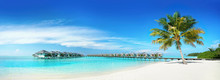 Coconut Palm Tree On Amazing P...